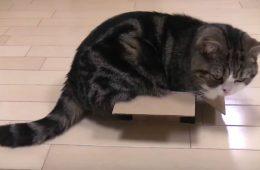 Katze sitzt in einer Box
