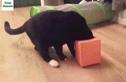 Katze steckt Kopf in eine Box